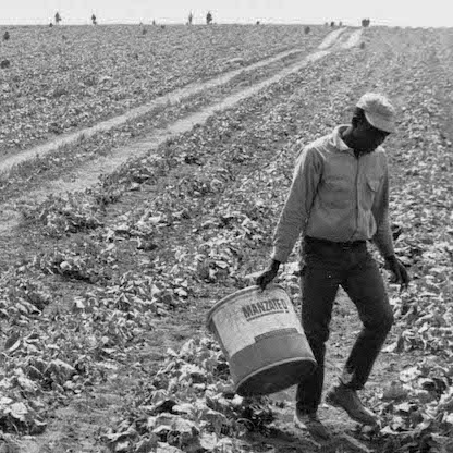 detail of a black and white picture showing a man leaving a pickle field carrying a large bucket