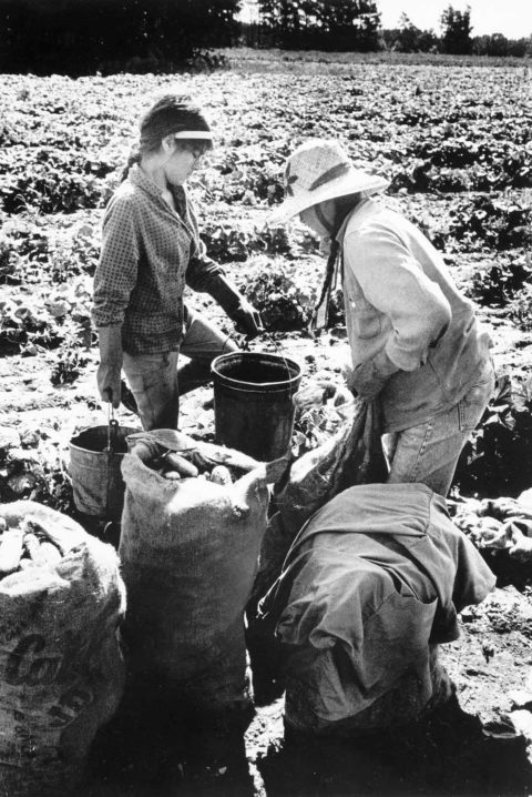 a black and white photo fo a mother and her daughter picking cucumbers in a field during summer. the mother is wearing a hat and there are larger bags of pickles stacked beside the two women.