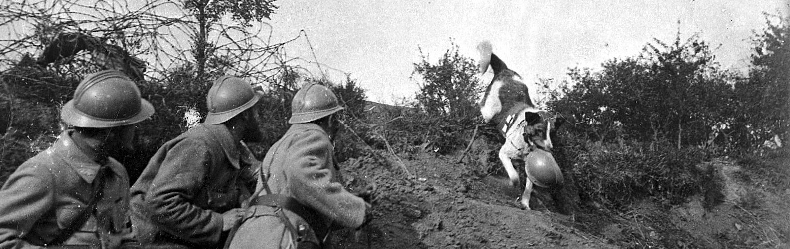 wounded soldiers in WWI wait for a rescue dog
