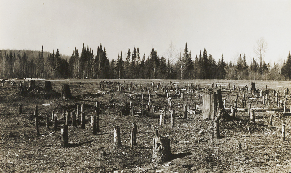 Cutover land near Nelma, WI, in Forest County (adjacent to Langlade County), April 1937. Photograph by Russell Lee, courtesy of the Wisconsin Historical Society, Image ID 105729.