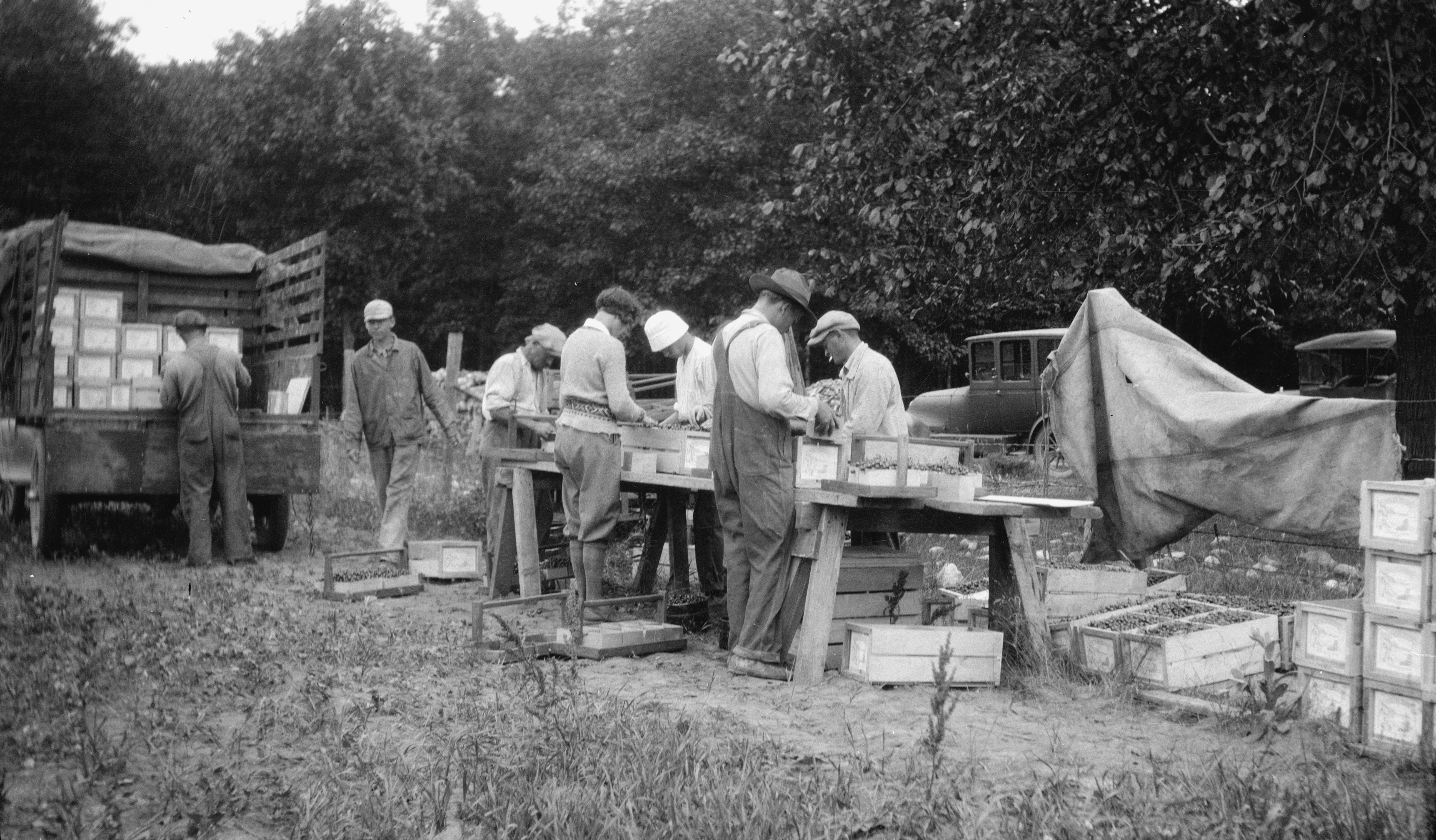Packing cherries for shipment in 1924. Image courtesy of the Wisconsin Historical Society. Image ID: 93324.