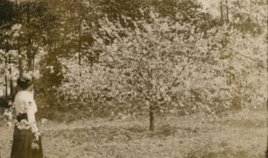 Cherryland promoted the natural beauty of the cherry orchards, and the annual blossoming of the trees proved a popular tourist draw. Photograph courtesy of the Wisconsin Historical Society. Image ID: 94781.