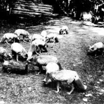 The Fromm Fur Farm
