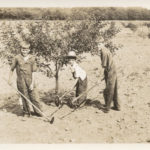 Oliver, Sheldon, and Glen Fardig help in the Fardig Orchard in Ephraim, WI, c. 1930. Photograph courtesy of the Ephraim Historical Foundation.