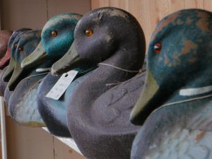 A shelf lined with carved duck decoys of different colors and sizes.