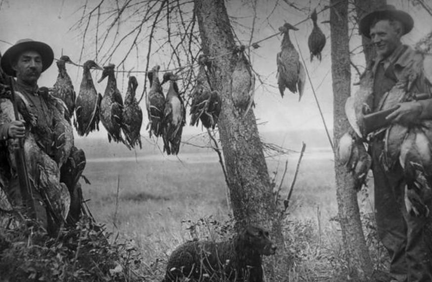 A black and white photo showing two men standing beside a line of ducks they have killed.