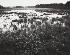 a black and white photo of a marsh with water
