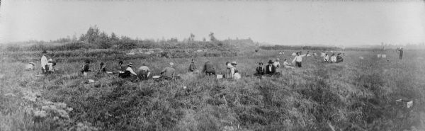 Members of the Ho Chunk nation harvest cranberries in 1913
