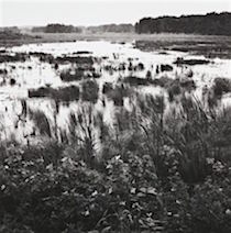 image of a marsh