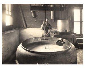 A man cutting curd in a cheese factory